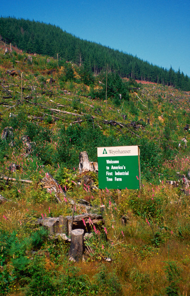 Weyerhaeuser Tree Farm in Washington State, n.d.