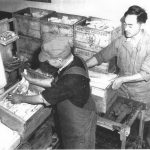 Japanese-Americans working at Curtiss Farms, c.1943