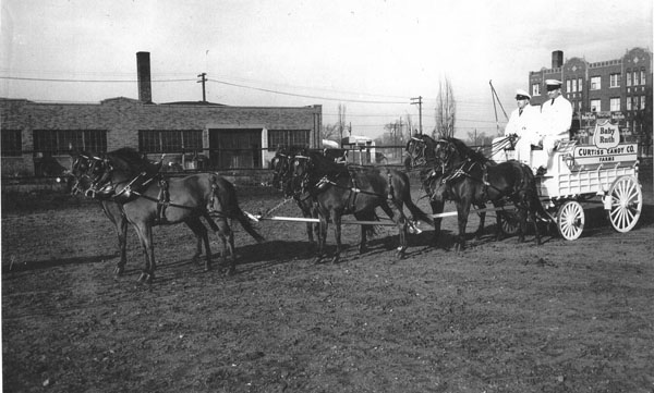 Curtiss Farm Six Pony Hitch, n.d.