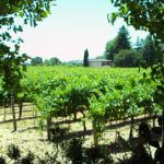 Hopper Creek vineyard