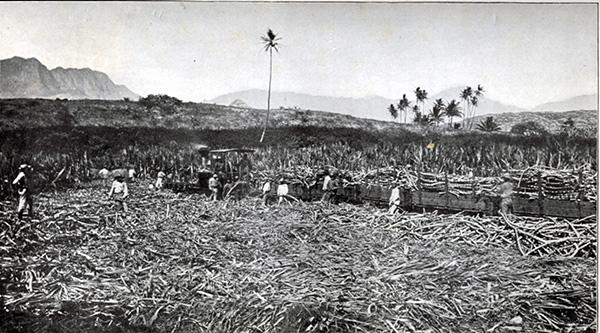 Loading sugar in Maui, ca. mid-1890s